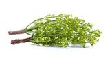 Siamese neem tree, Nim, Margosa, Quinine