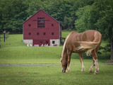 Fototapety Horse and Red Barn: A horse grazing in a green pasture with a large red barn in the distance