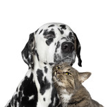 close friendship between a cat and a dog - 104041004