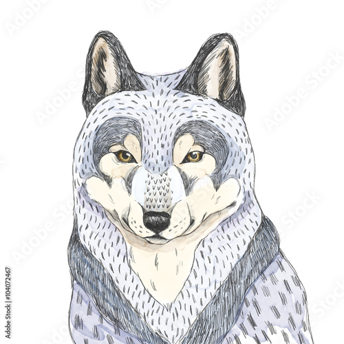 Wolf sketch. Watercolor illustration. - 104072467