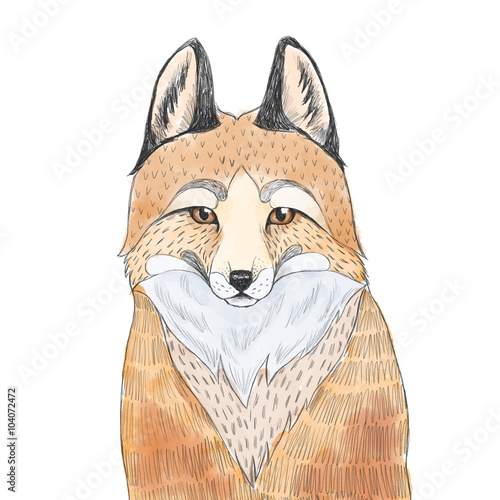 Fox sketch. Watercolor illustration. - 104072472