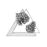 Two pinecone on the triangle background - 104077280