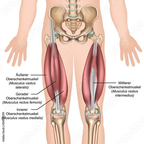 GamesAgeddon - Anatomie des Quadrizeps Muskeln - Lizenzfreie Fotos ...