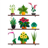 Fototapety Illustration of houseplants, indoor and office plants in pot. Dracaena, fern, bamboo, spathyfyllium, orchids, Calla lily, aloe vera, gerbera, snake plant, anthuriums. Flat plants, vector icon set