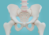 Hip Skeleton on blue background.