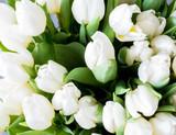 White tulips background