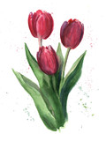 Tulips, watercolor - 104217465