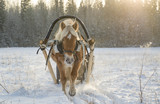 Horse and sleigh in winter