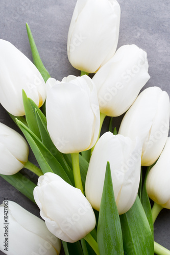 More white tulip on the grey background.