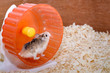 Hamster enthusiasts player misbehavior
