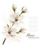 Fototapety Spring background with blossom brunch of white magnolia. Vector