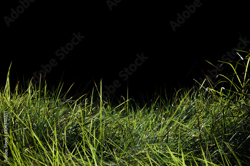 Foto op Plexiglas Landschappen Green grass field background.