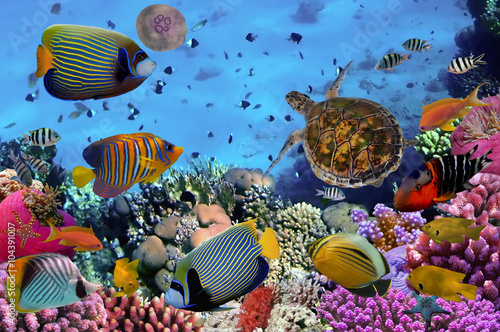 Obraz na Szkle colorful coral reef with many fishes