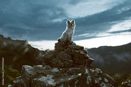 Dog sits on a rock in the mountains