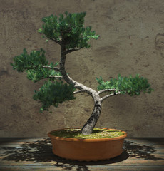 Decorative Bonsai Tree