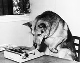 Dog sitting on a chair looking at the typewriter  - 104444075
