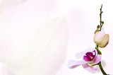 Orchid background on bud backdrop