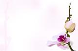 Orchid background on stem backdrop