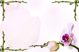 Orchid background on bud backdrop. Stems in the corners