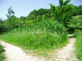 小道と夏草茂る風景