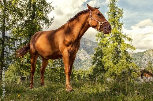 Poster cavallo in montagna