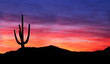 Sunset in the Desert - Colorful Sunset in the Arizona Desert with silhouette of Saguaro Cactus