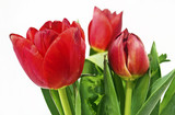 red tulips flower bouquet - red flowers green leaves