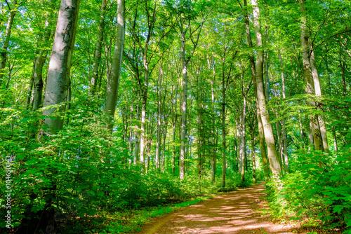 Fotobehang Groene Waldweg im Sonnenschein