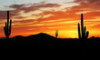 Sunset in Wild West - Beautiful sunset in the Arizona desert with Silhouette of Cactus and palm trees off in the distance