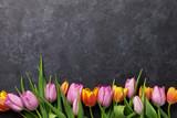 Fototapety Fresh colorful tulip flowers