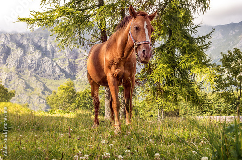 Poster cavallo pascolo