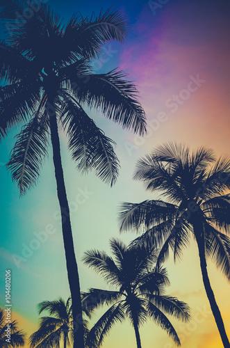 Aluminium Palm boom Retro Sunset Palm Trees