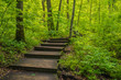 Path of wooden stairs disappearing into the spring woods at Nerstrand Big Woods State Park in Minnesota