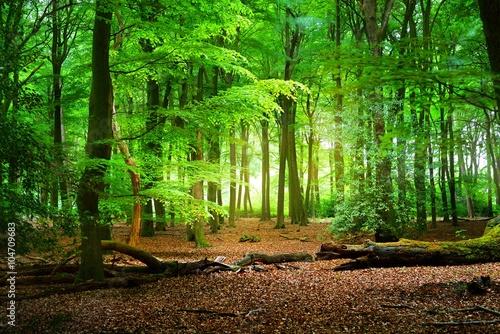 Zdjęcia na płótnie, fototapety na wymiar, obrazy na ścianę : Walkway in a spring forest in the Netherlands