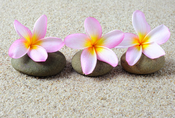 Selective focus of three frangipani flower on a zen stones with sand background