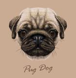Fototapety Vector Illustrative Portrait of Pug Dog.