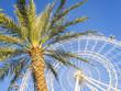 Ferris wheel and palm tree, blue sky,