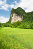 Karst mountain cliff overgrown vegetation