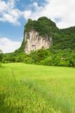 Karst mountain cliff overgrown vegetation