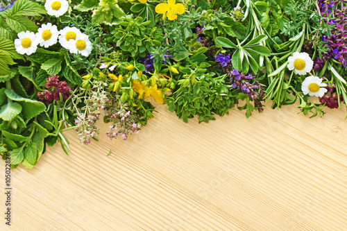 fototapeta na ścianę kräuter und heilpflanzen