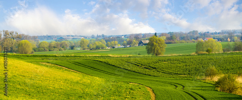 Zdjęcia na płótnie, fototapety, obrazy : wiosenne pole