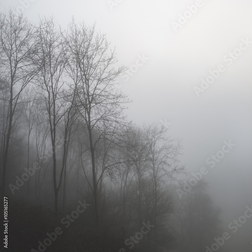 Fototapeta Moody dramatic foggy forest landscape Spring Autumn Fall