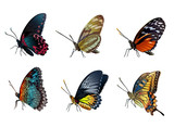Six colorful butterflies sitting on a white background