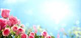 Pink rose against sky - 105218245