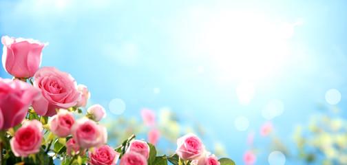 Pink rose against sky