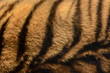 Orange and black striped tiger fur animal background pattern