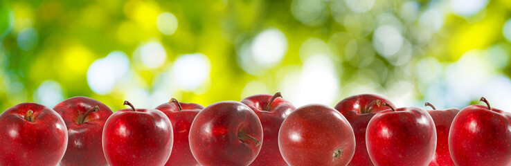 image of apples in the garden on a green background close-up