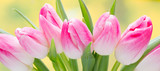 Fototapety Spring flowers. Tulip bouquet on the bokeh background.