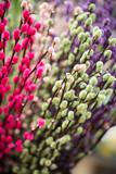 gefärbte Weidenkätzchen