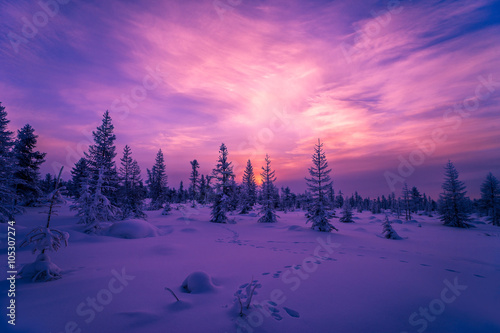 Poster Snoeien Winter Evening Landscape with forest, cloudy sky and sun